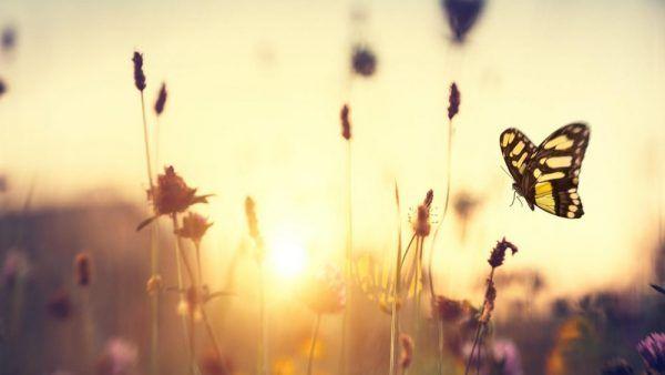 retiro primavera purogozo xavimadrid